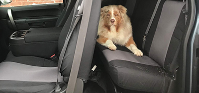 Fitment Dog Seat Covers
