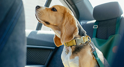 Dog Safety in a Car