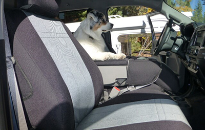 Best Seat Covers for Your Dogs