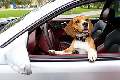 Protect Seats from Dogs with ShearComfort Seat Covers