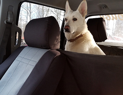 Seat Covers Best for Dogs