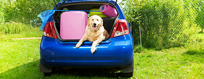 Travelling Dog in a Car