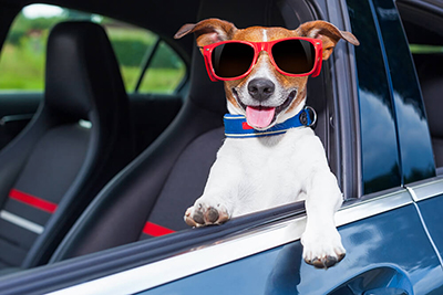 Travelling Dog in Sunglasses